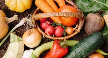 世界初「ヴィーガン料理を専門とするシェフや栄養士の職業訓練」がドイツで始動!