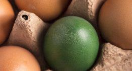 ベジタリアンの卵づくり