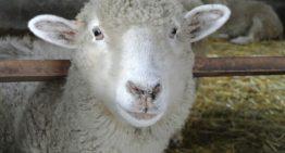 肉食の環境への影響~畜産業と温室効果ガス~