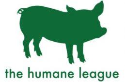 【求人情報】平飼い卵普及活動をしている米NGOザ・ヒューメイン・リーグの日本事務局の仕事