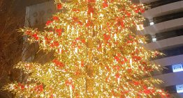 日本で過ごすヴィーガン    クリスマス